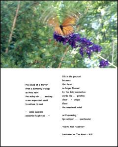 Transional Flutter-Fly