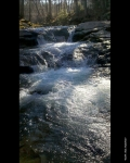 Whirlpool Falls